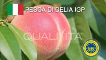Pesca di Delia IGP - Italia