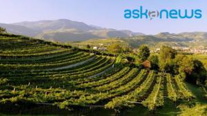 Consorzio Vini Valpolicella
