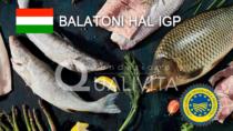 Balatoni Hal IGP - Ungheria