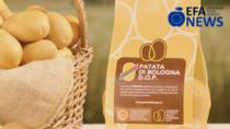 Cresce la superficie della Patata di Bologna DOP: +17%
