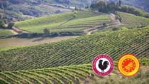 VIII Granfondo del Gallo Nero - Torna la gara nel territorio del Chianti Classico DOP in tempo di vendemmia