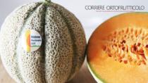 Melone Mantovano IGP punta ad ampliare i consumi con una nuova campagna comunicazione