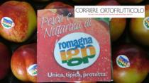 Pesca e Nettarina di Romagna IGP, un messaggio di resistenza nonostante le difficoltà