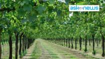 Consorzio Vini Venezia: previsioni positive per la vendemmia 2021