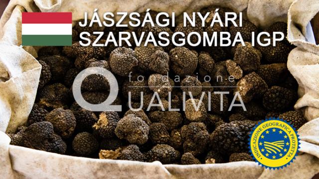Jászsági Nyári Szarvasgomba IGP