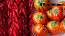 I Peperoni di Senise IGP e la Melanzana di Rotonda DOP tra i 50 prodotti alimentari italiani più contraffatti