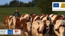 LIFE TTGG, le prime implementazioni della metodologia PEF nella filiera del Comté